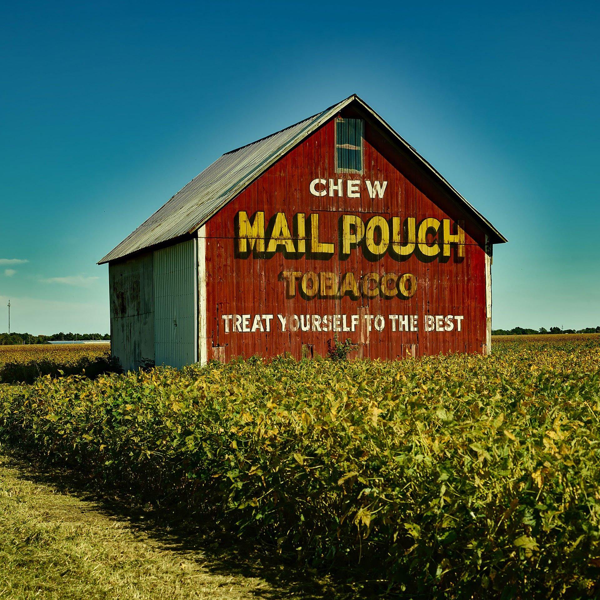 Trocken stopfen zu tabak zum Trockenen Tabak